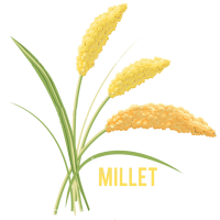 yellow-millet1.png